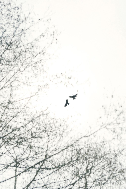 Freebirds ii