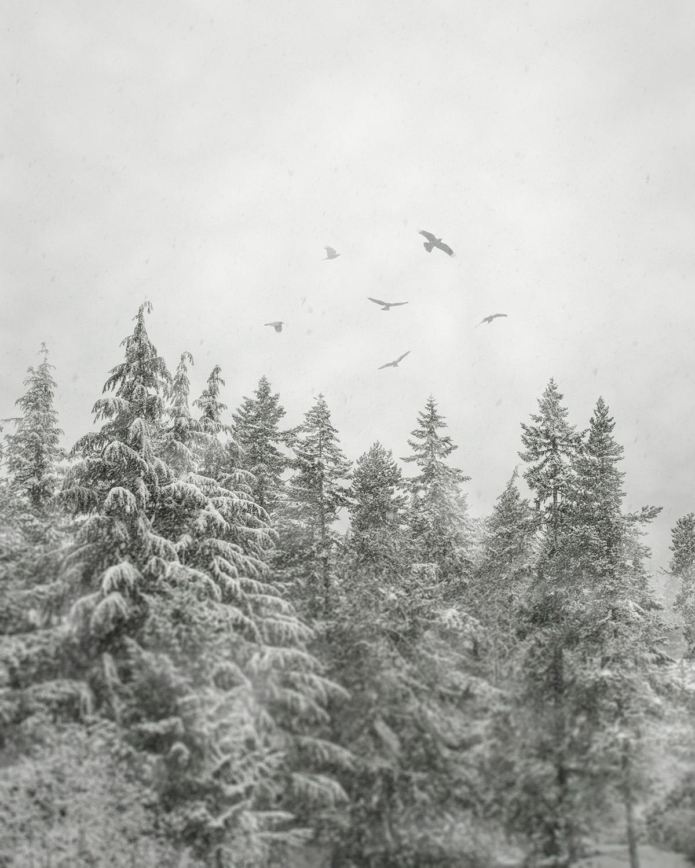 Snowbirds i - Whistler, BC