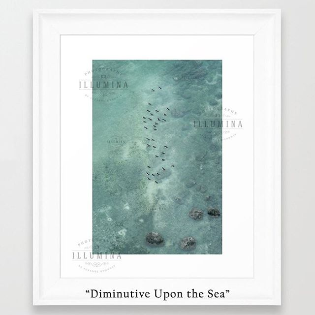 "New work! ""Diminutive Upon the Sea"" An overhead view of overwintering Goldeneye Ducks bobbing in the shallows of Burrard Inlet off the Stanley Park seawall. Available now through @society6 and @displate Links in bio! . . #vancouverphotographer #goldeneye #goldeneyeducks #stanleypark #homedecor #vancouverart #vancouverhomedecor #whiteframe #wildlife #britishcolumbia #canada #wildlife #peaceful #water #ocean #sea #translucent #green"