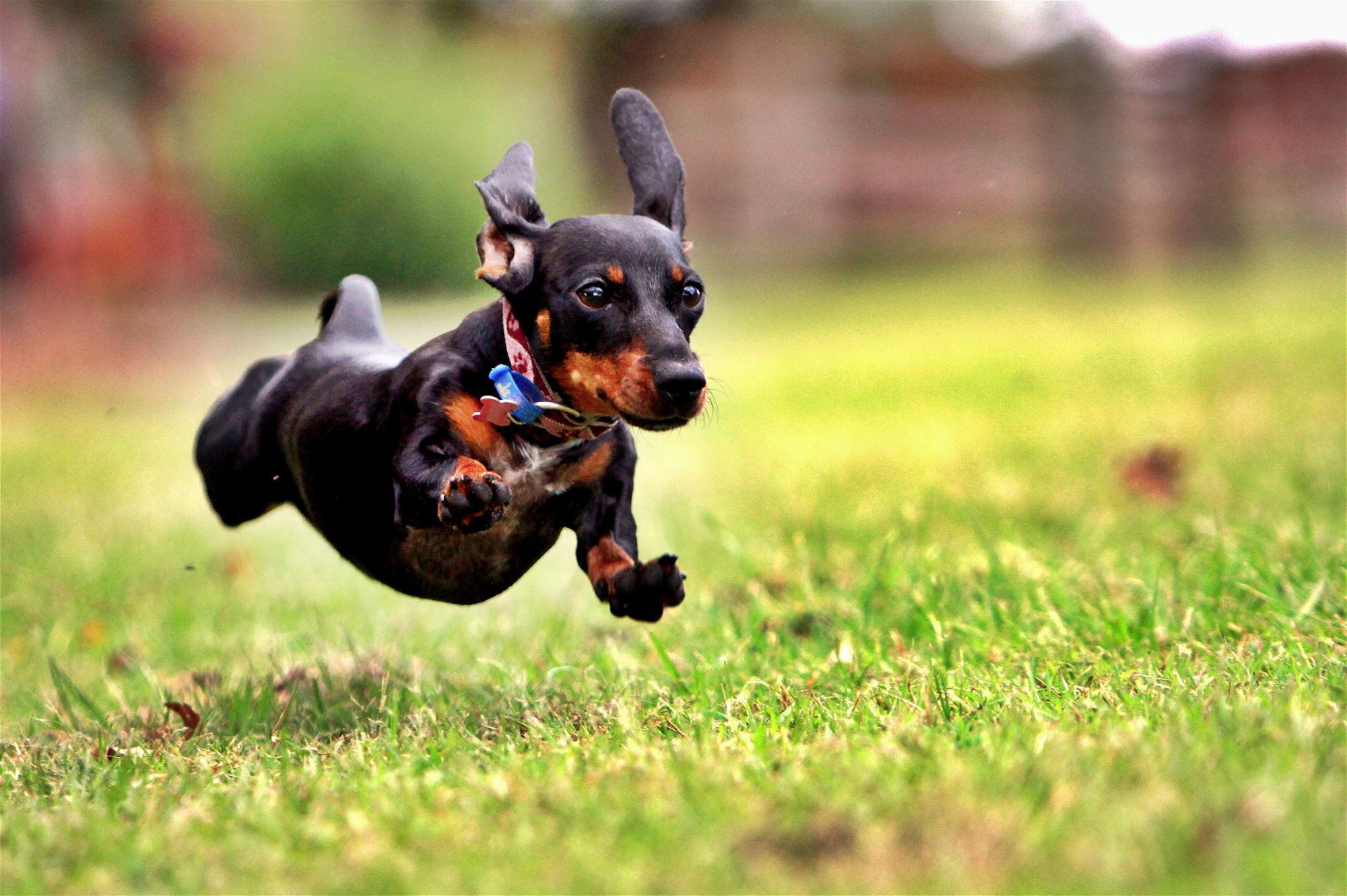 """Photo credit: """"crazy dog"""" by  m.maddo Licensed under  CC BY 2.0 ."""