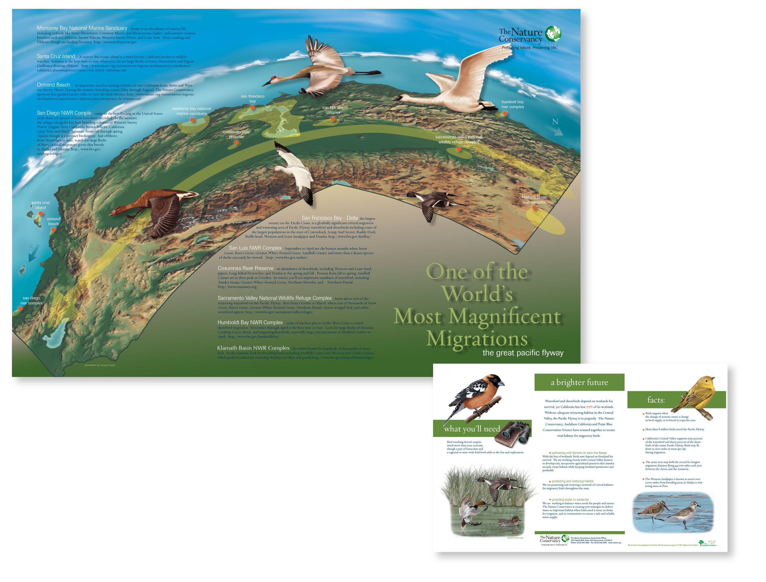"""One of the World's Most Magnificent Migrations"" brochure of Californian birds"