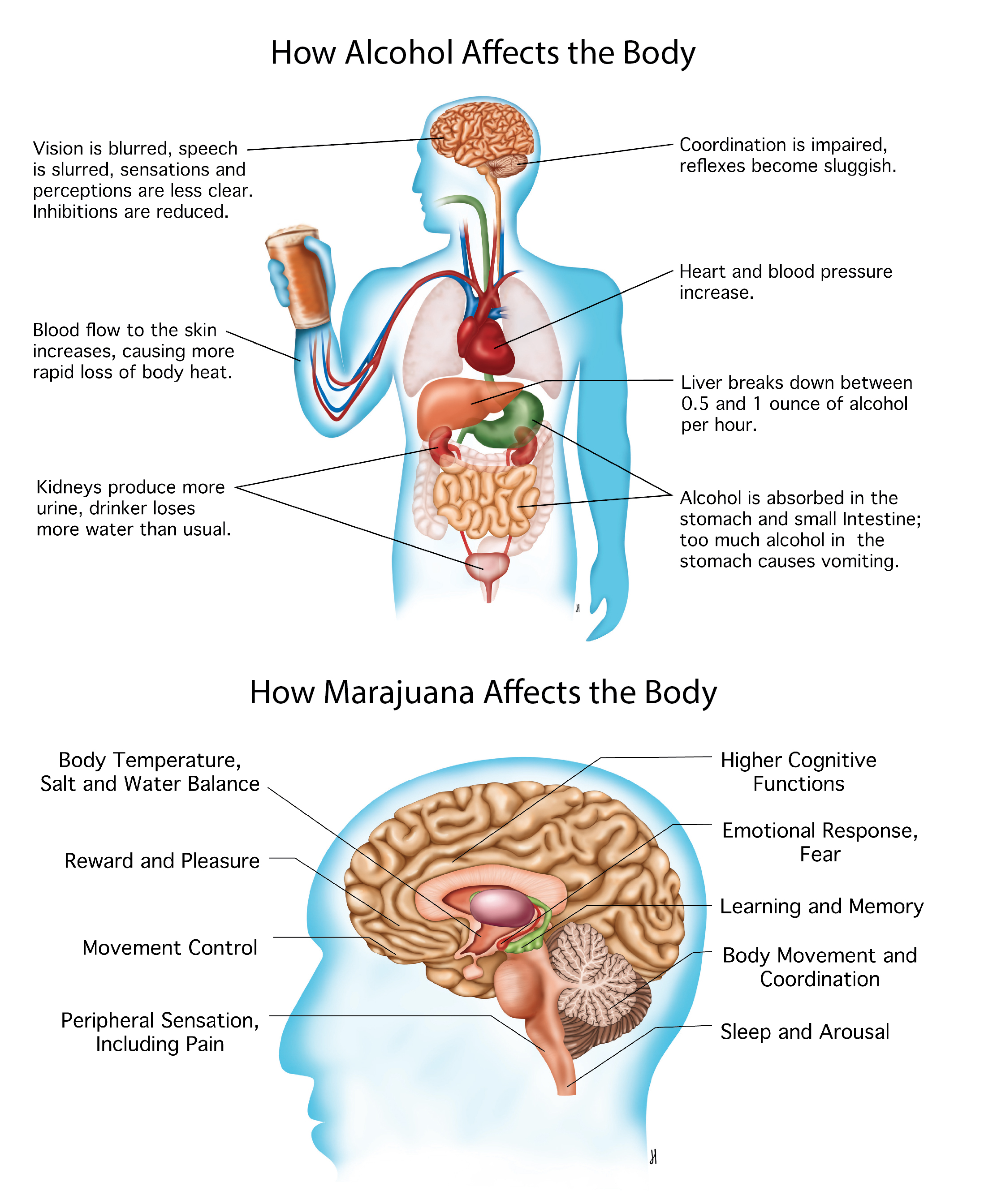 How Alcohol and Marajuana affect the body