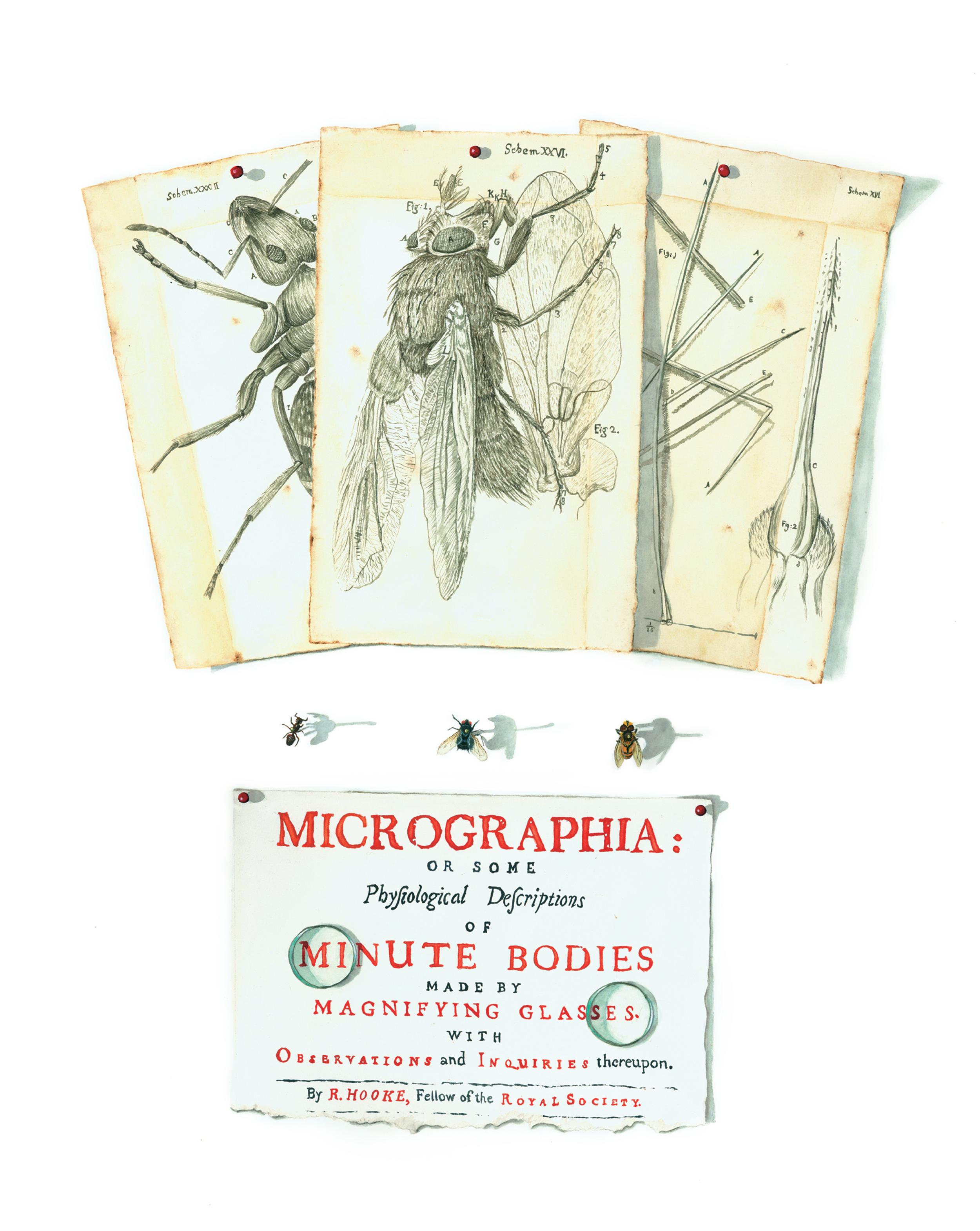 Micrographia Tromp l'oeil