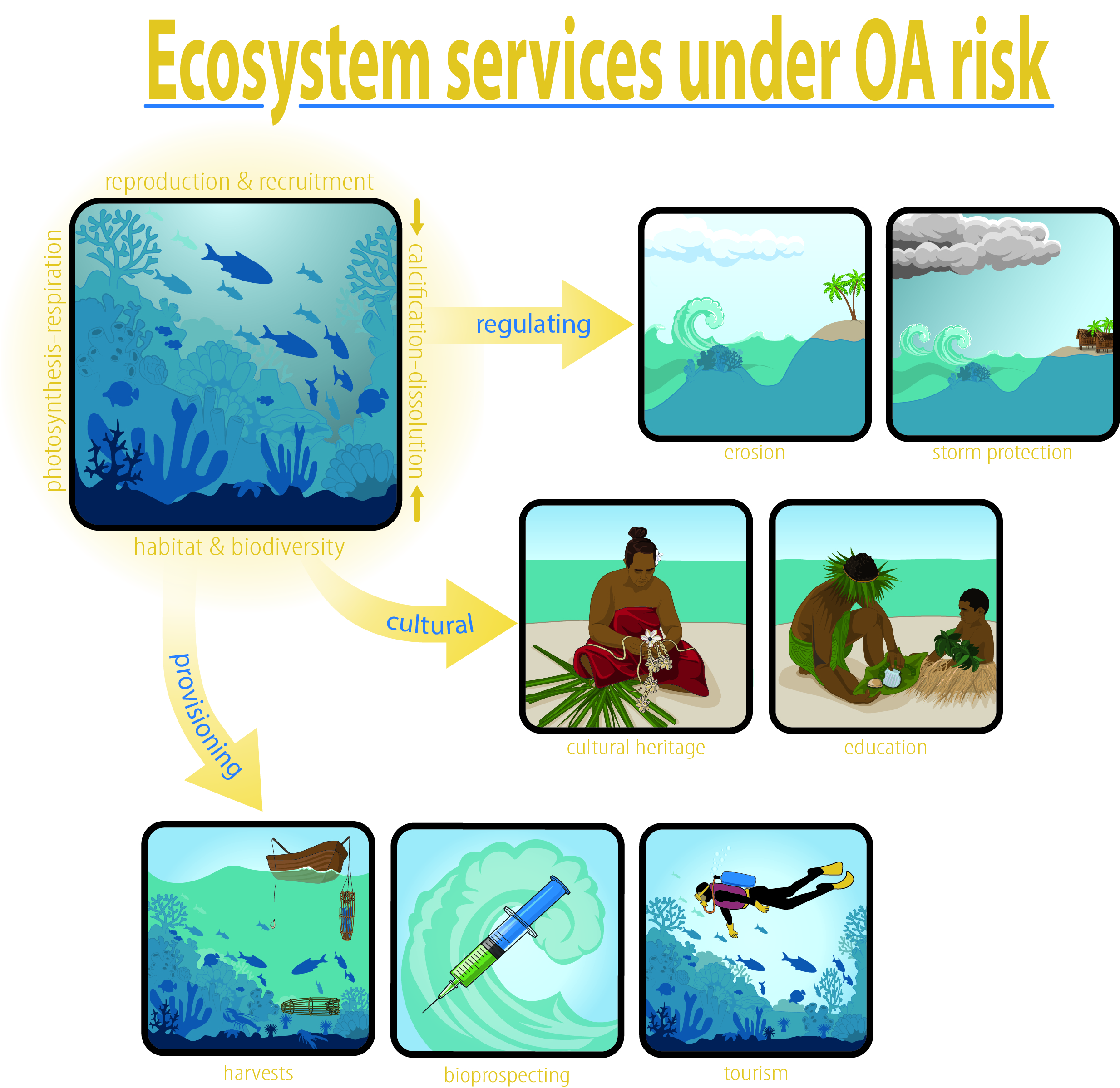 """Ecosystem services under OA risk"""