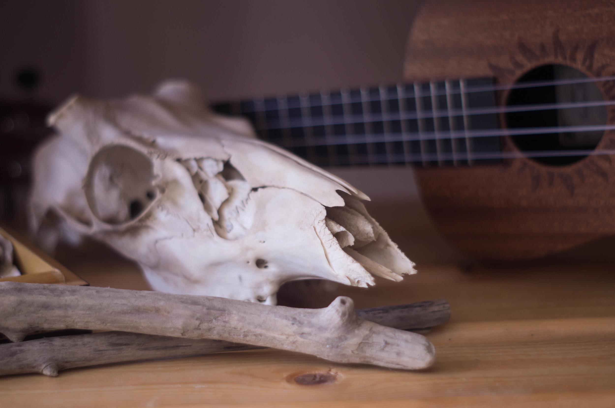 deer-skull-and-driftwood