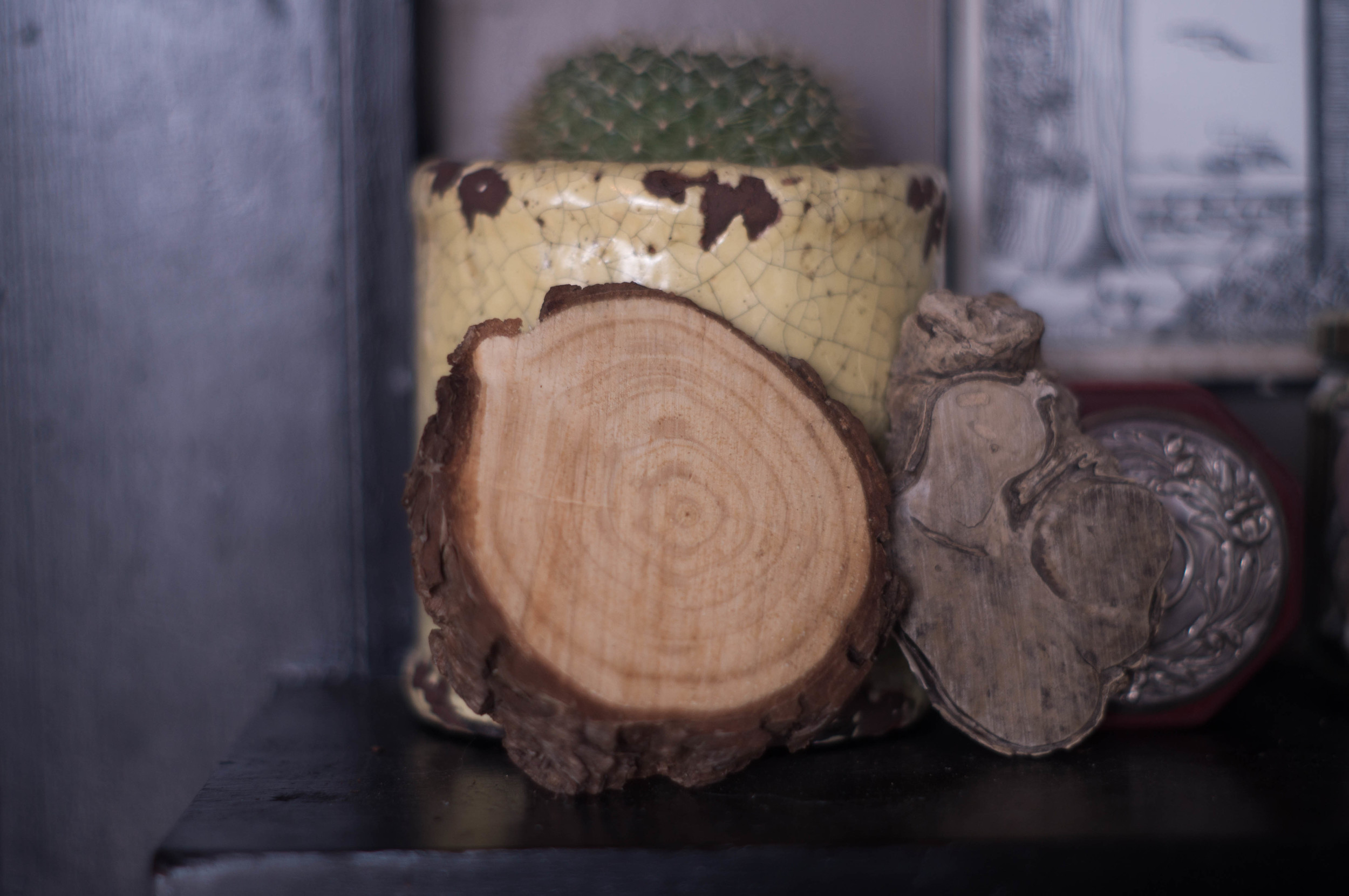 cactus-with-driftwood