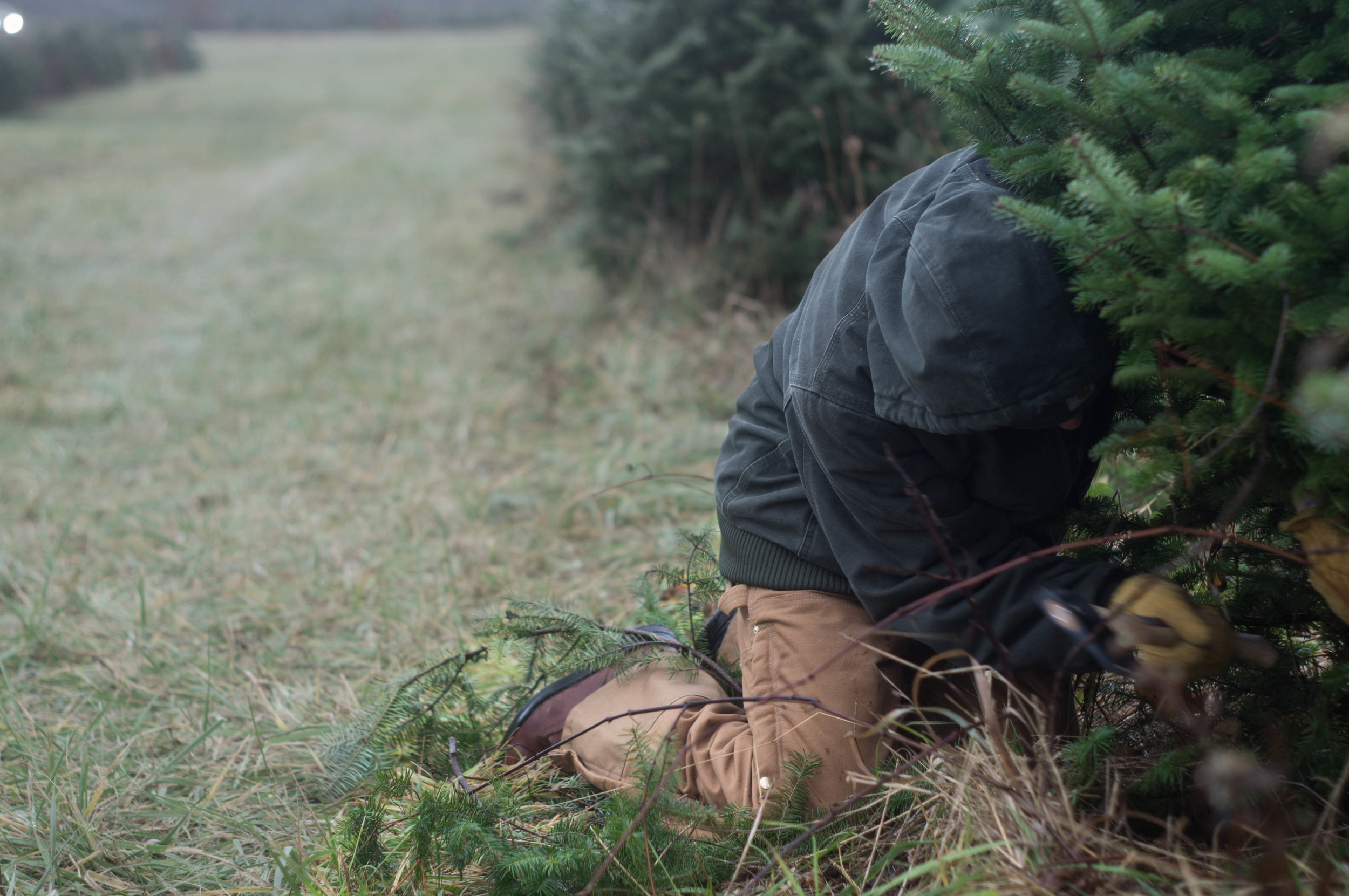 chopping-down-tree