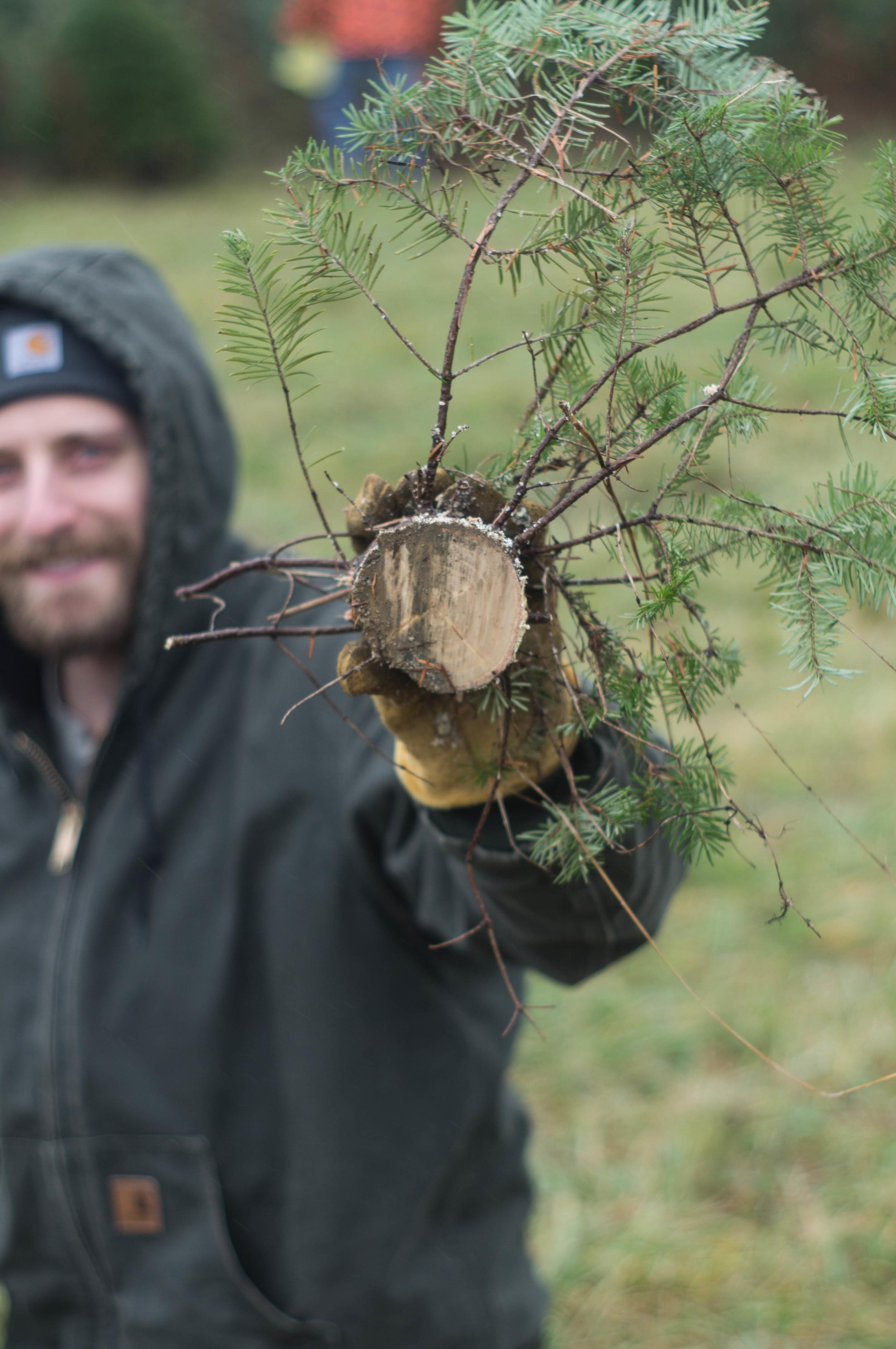 brother-holding-tree-stump