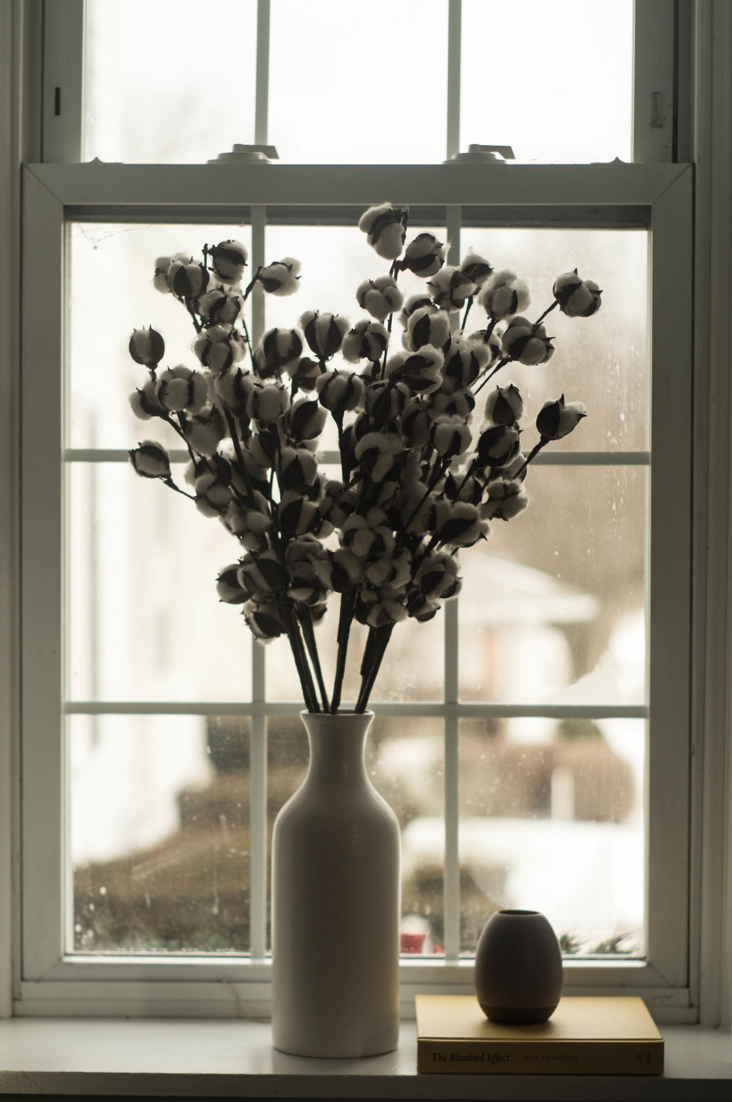 cotton pods flower vase windowsill image by samantha spigos