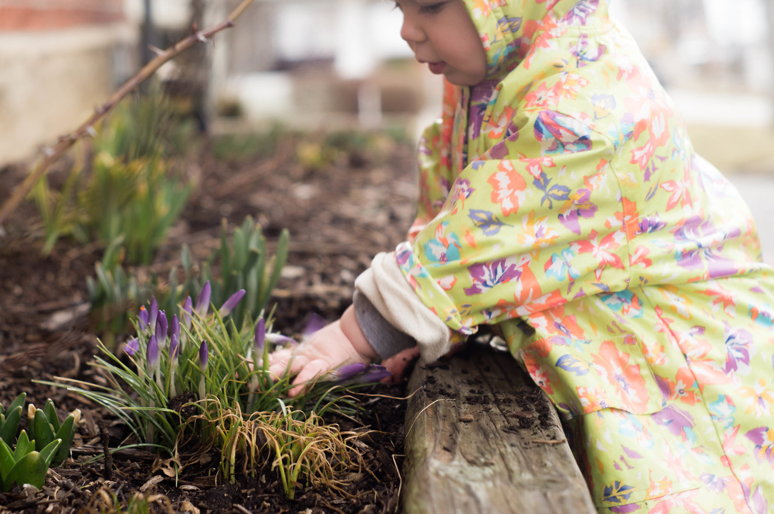 rosemary puts her hands in soil and crocuses image by samantha spigos