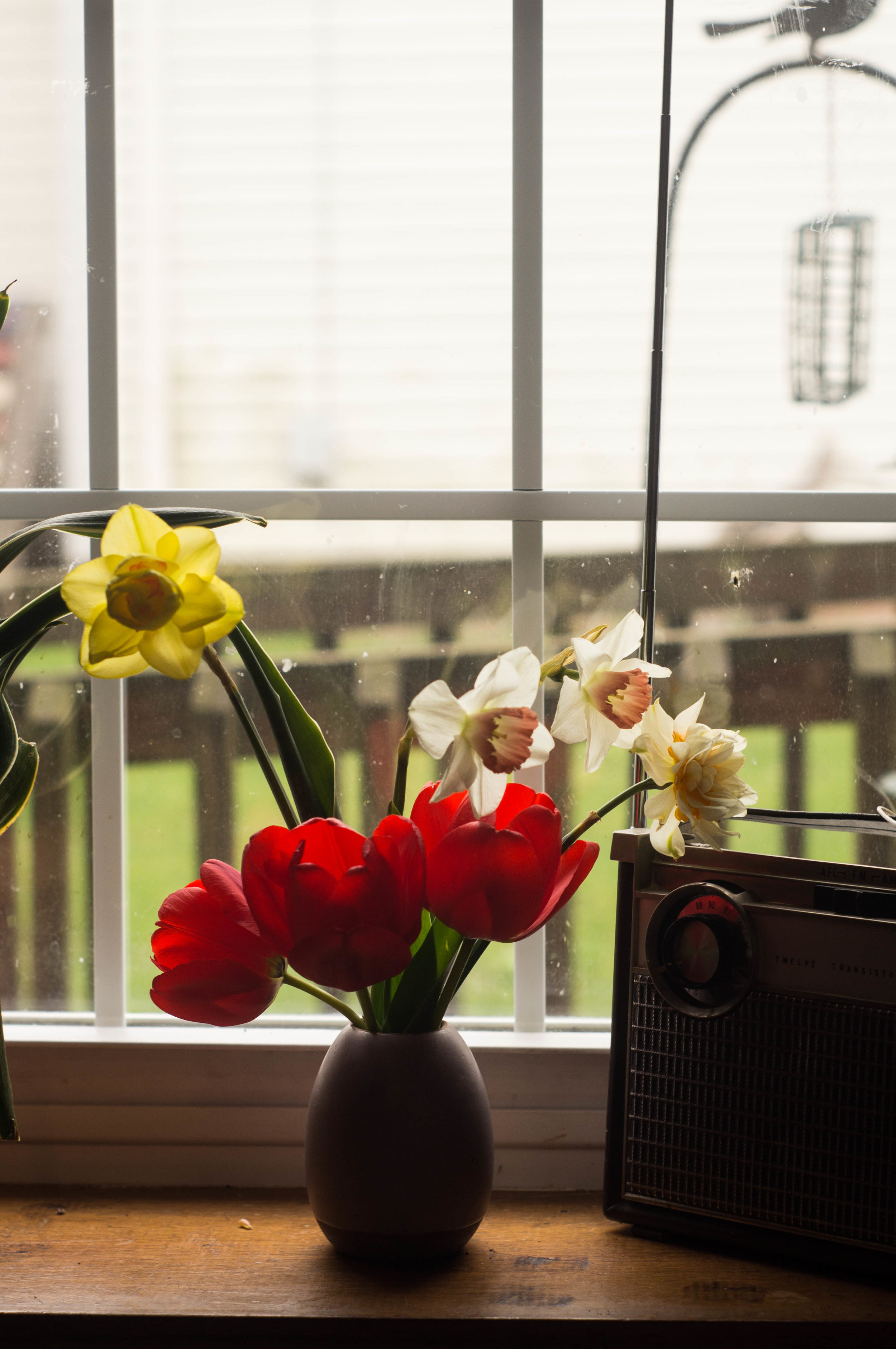 farm fresh tulips and daffodils in a vase by samantha spigos