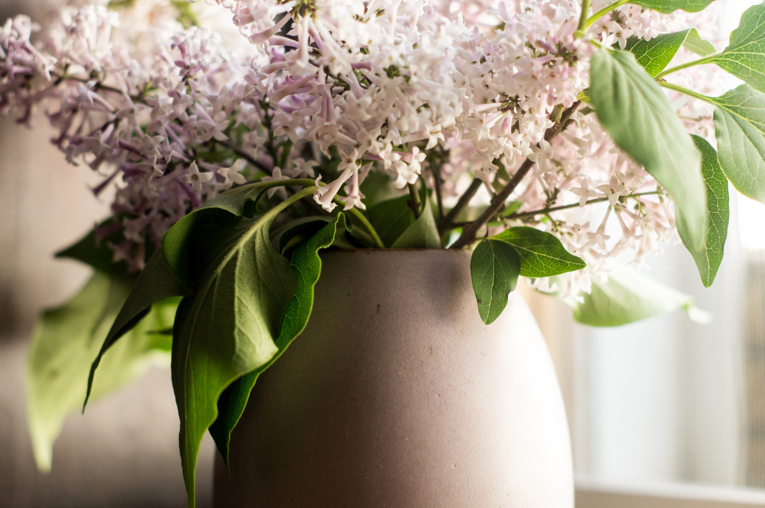 fresh lilac in a lilac colored ceramic vase by samantha spigos
