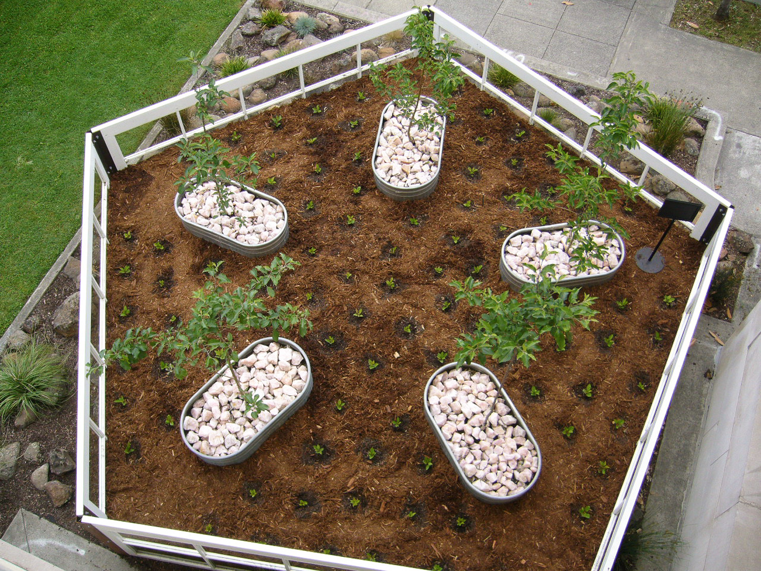 "SWEET SURVIVAL   2006-2008 .  Sonoma County Museum, Santa Rosa     CA  One year outdoor installation re biodiversity; multiple stakeholder     participation. Including Santa Rosa Jr. College staff and students & local     ""apple"" groups. Salvaged 11' hotel doors, soil, native plants, wild & local     apple trees."