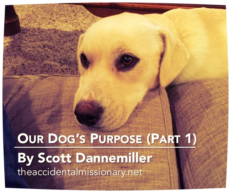 AM Dogs Purpose Part 1.jpg
