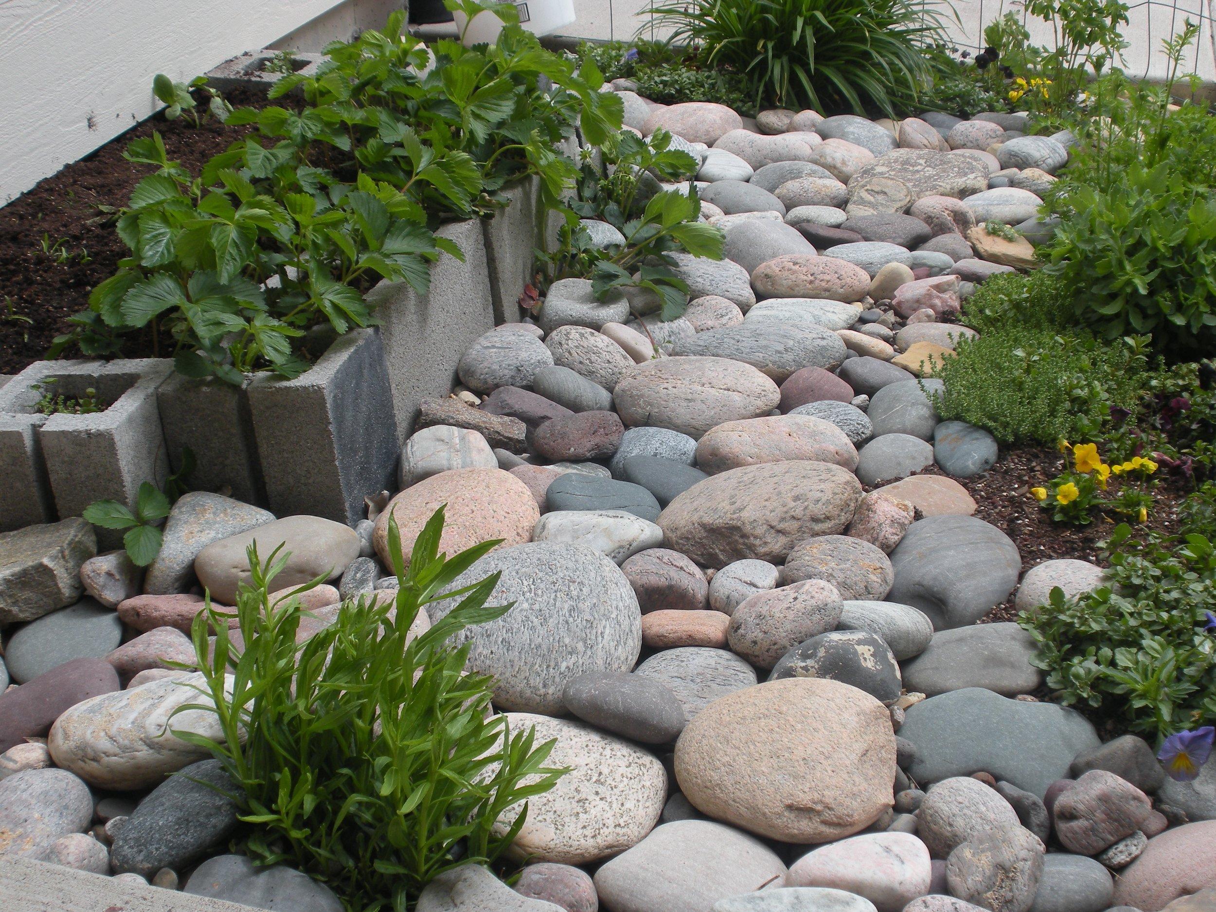 Urban Garden2.jpg