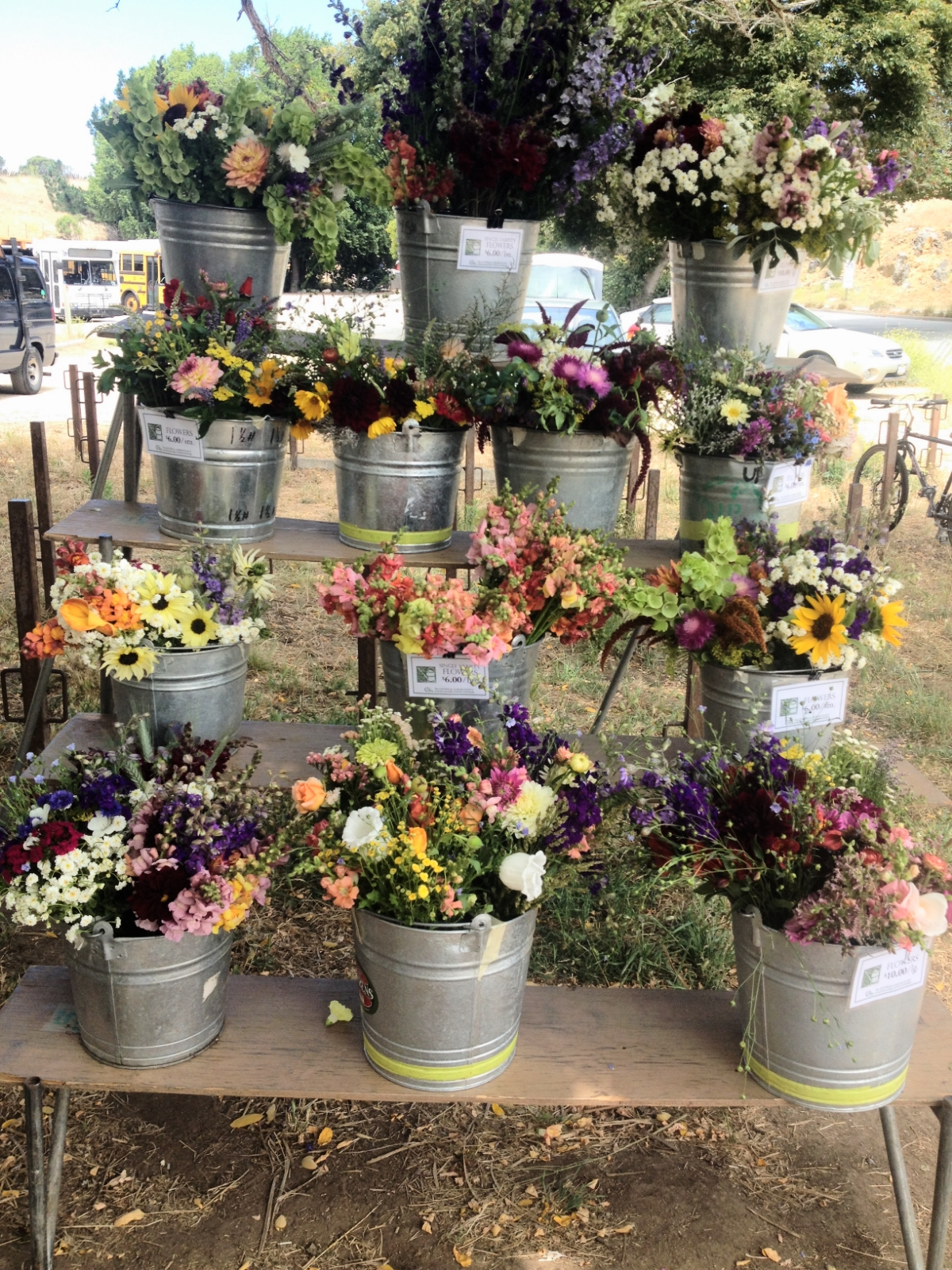 Gorgeous flowers at the UCSC Organic Farm Stand