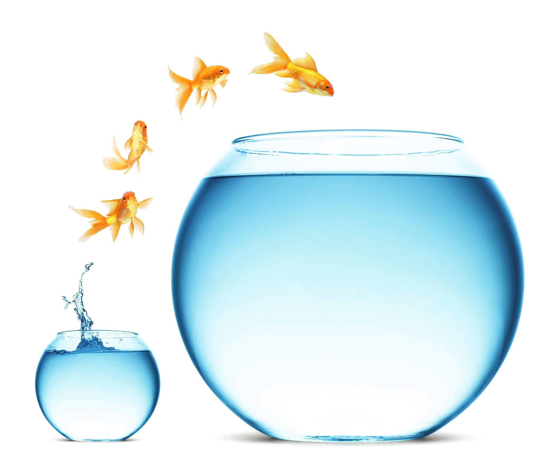 Goldfish jump Small.jpg