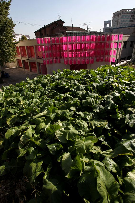 32 happolice cabbage.jpg
