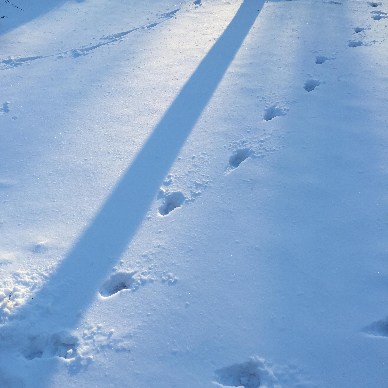 blue snow shadows at dusk light