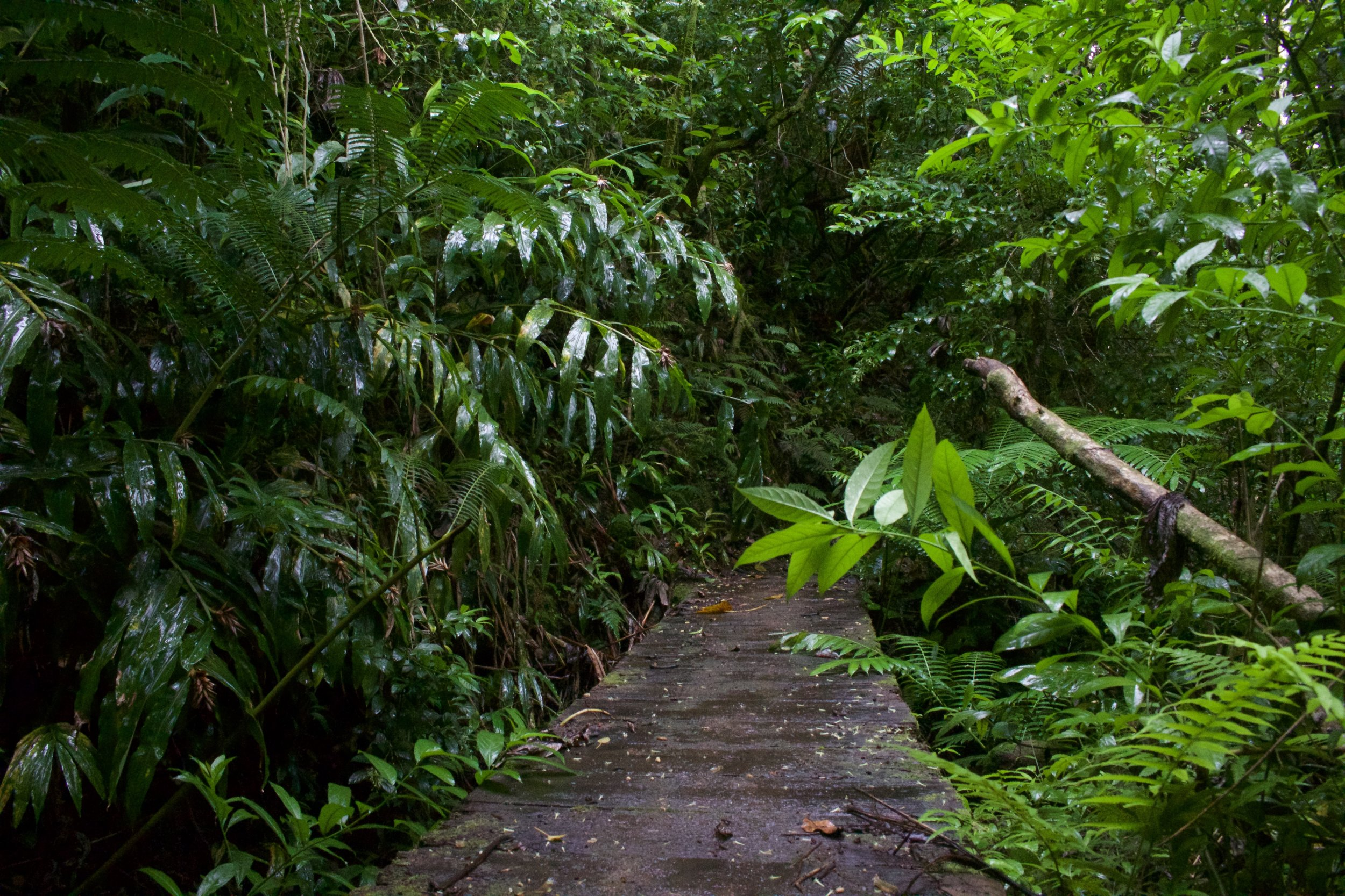 Waiakeakua Falls