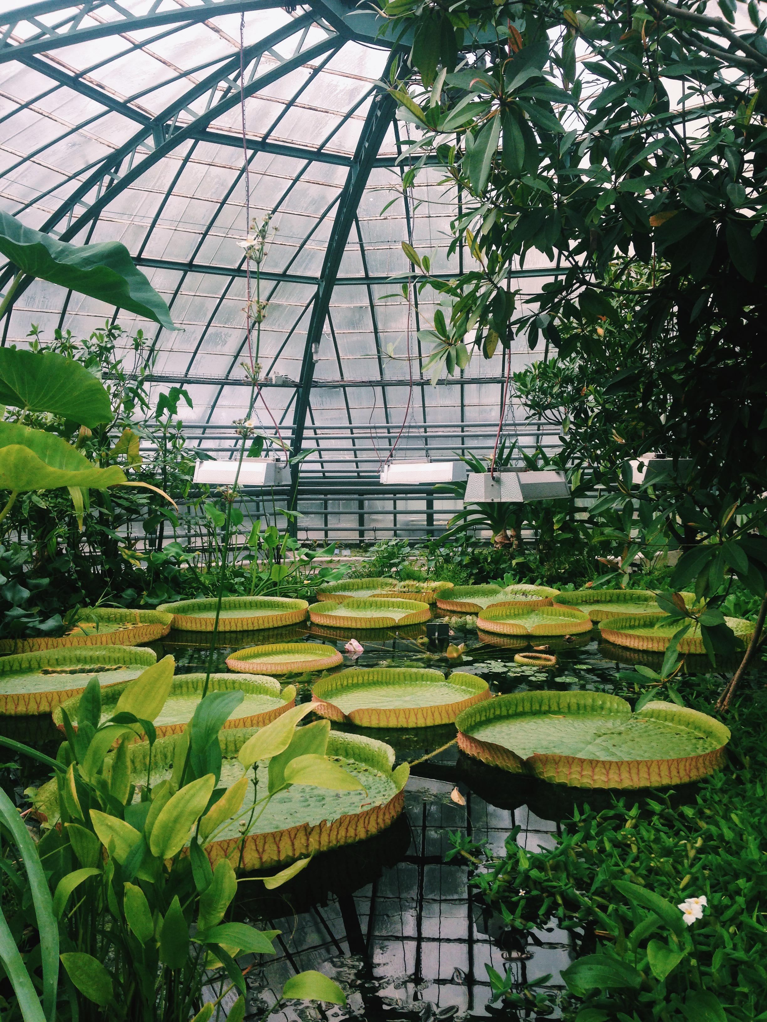 Viktoriahaus, Botanischer Garten der Universität Basel, 2015