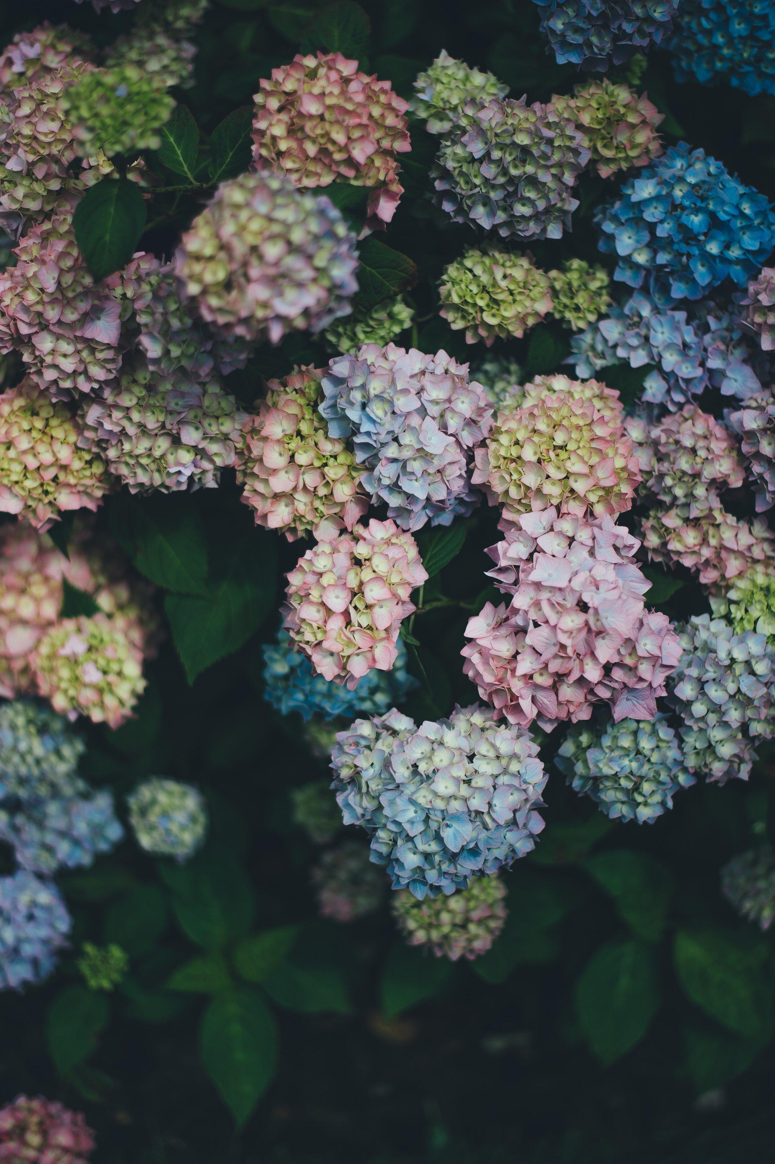 pastel blues, pinks, greens, dark greys