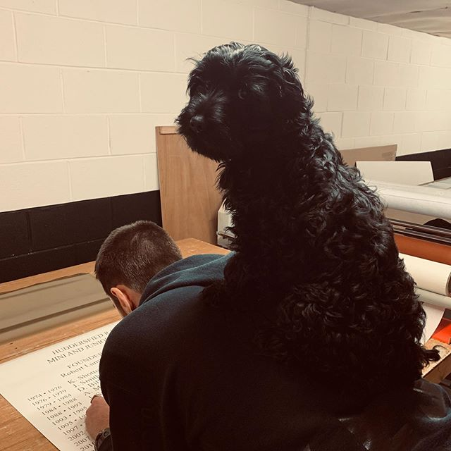 ‪Trying to get some work done for @Huddersfield_RU and Bruce aka @imbatmansdog is being a big help😂 @BNI_Terriers @MarshallsDirect #cutvinyl #cockerpoopuppy ‬#cockerpoo