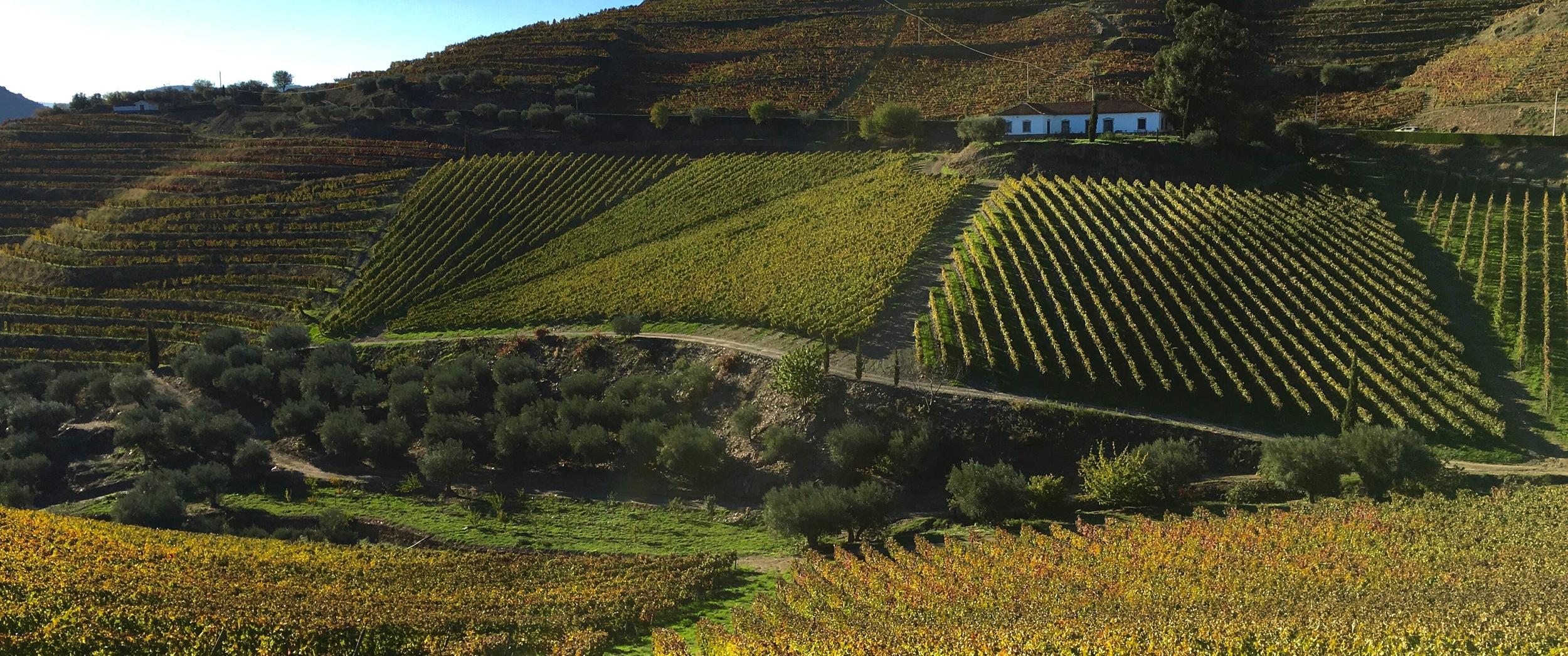 Quinta Do Crasto, Douro Valley, Portugal