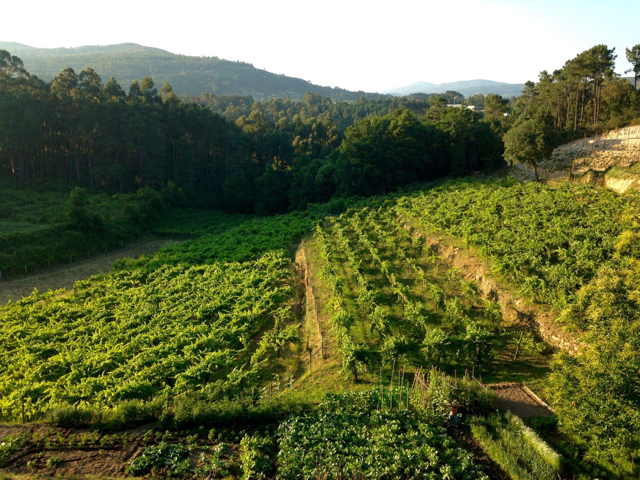vines & organic garden