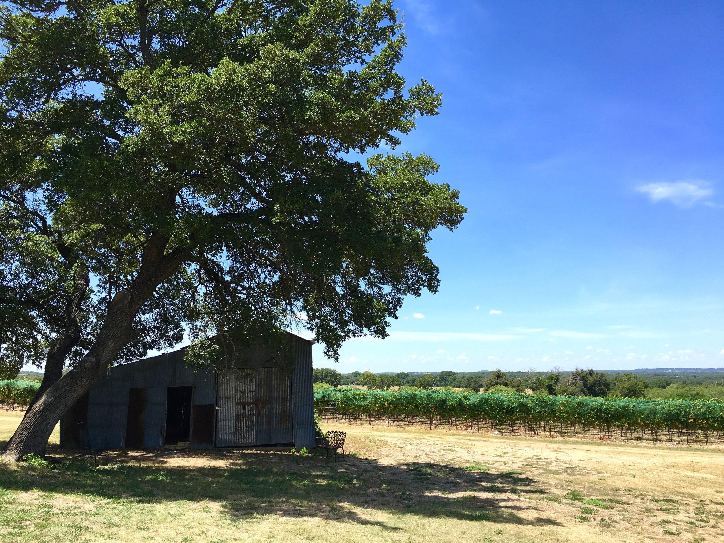 oak tree & vines