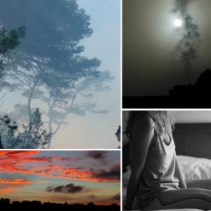 WF Collage5.jpg