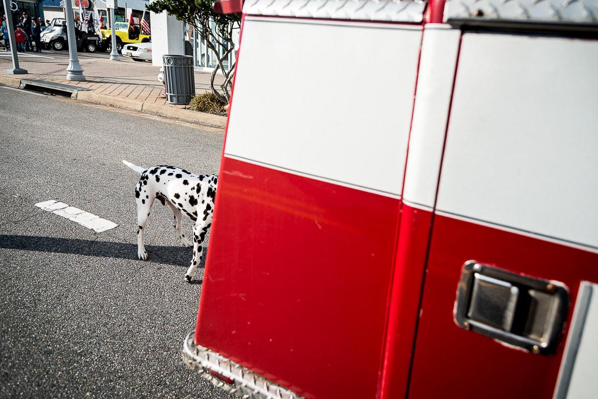 Dalmatian, Virginia Beach VA November 2013