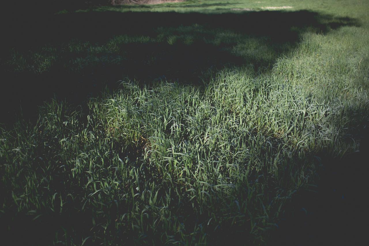 QFarms Spring shoot-40.jpg
