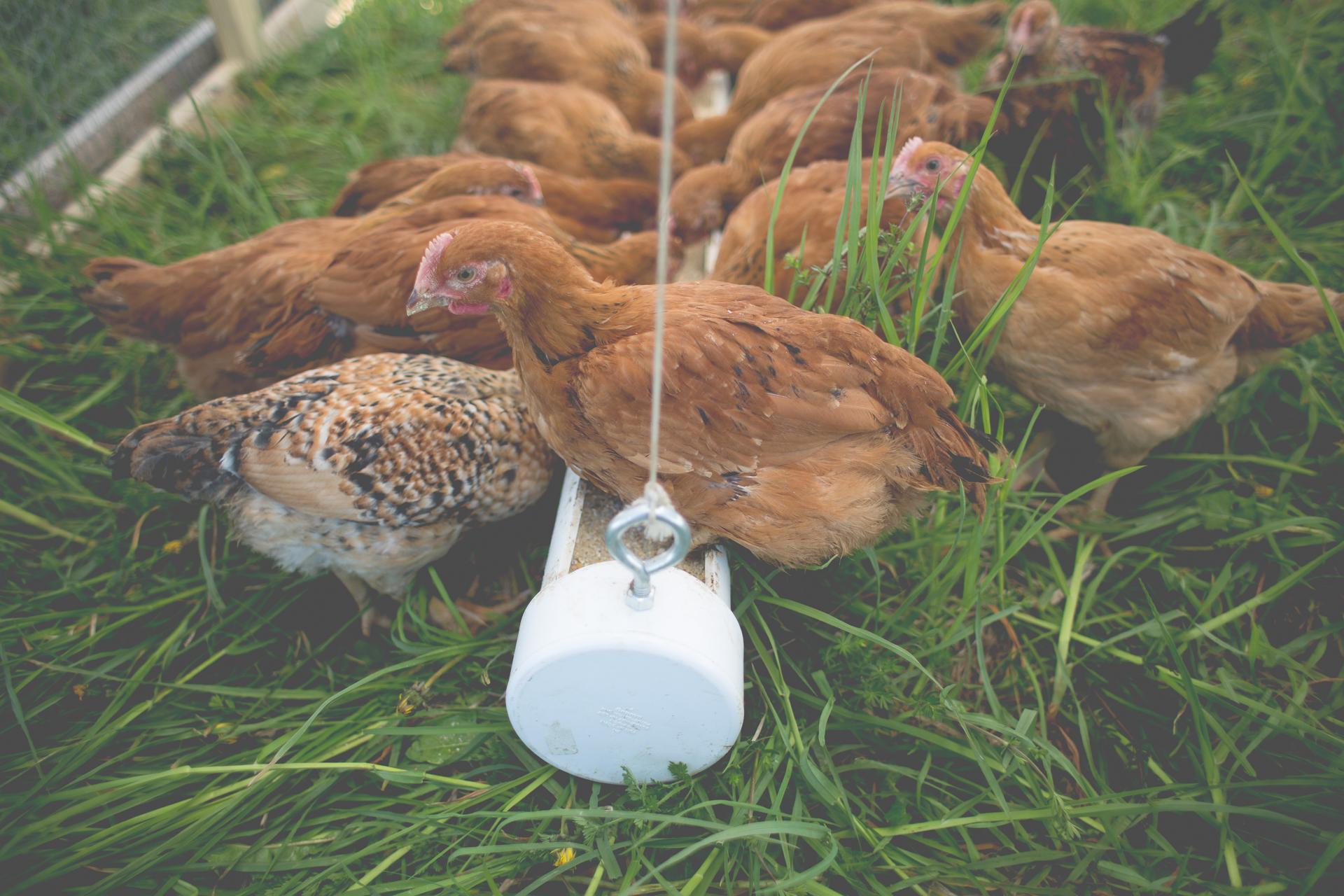 Q Farms Photos Extra Sep-2.jpg