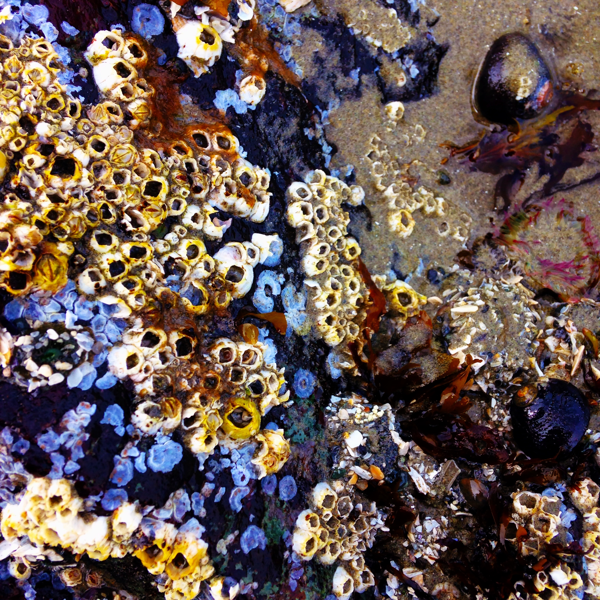 tide pool rock