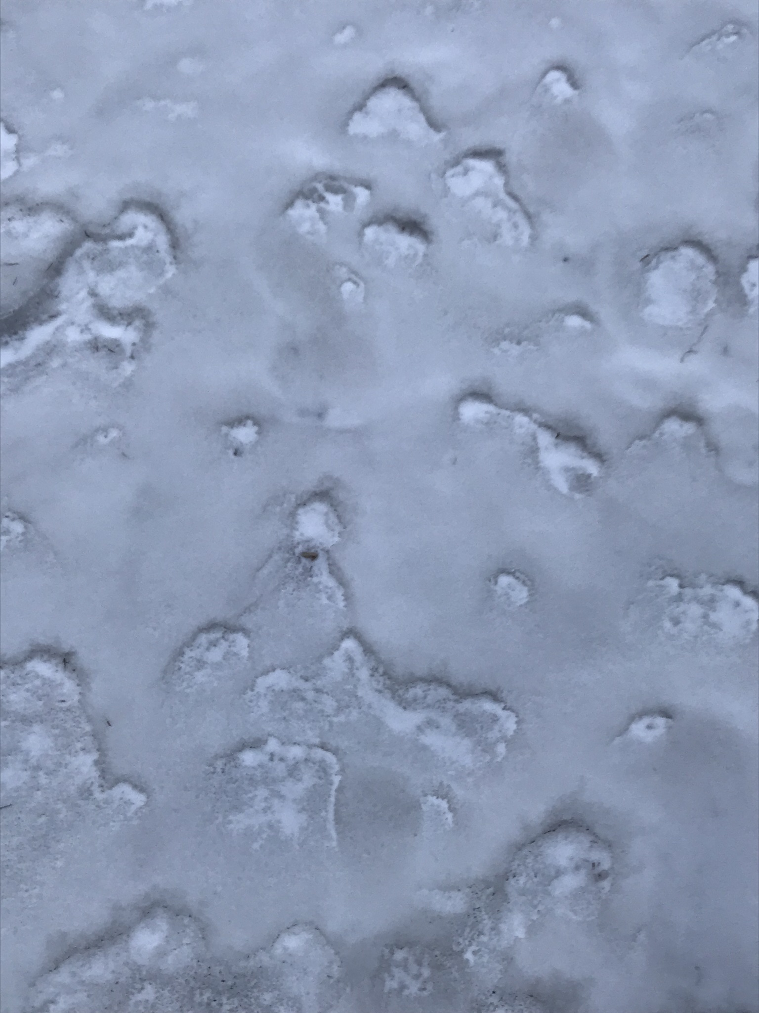 ice crust snow