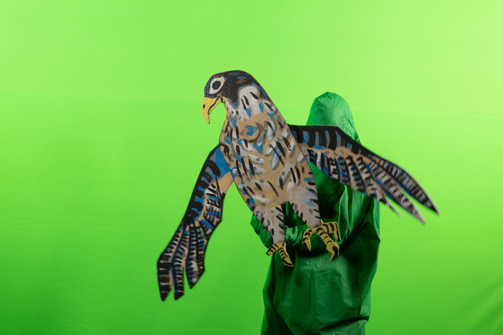 Green Screen Hawk