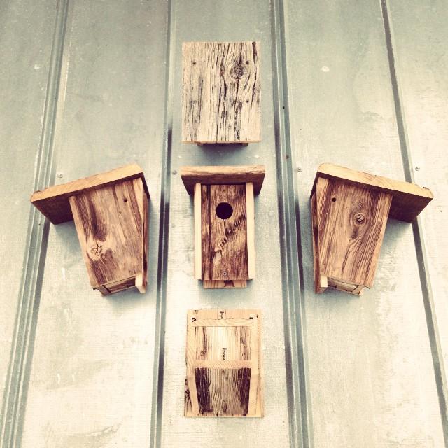 bird houses ready for the fair.