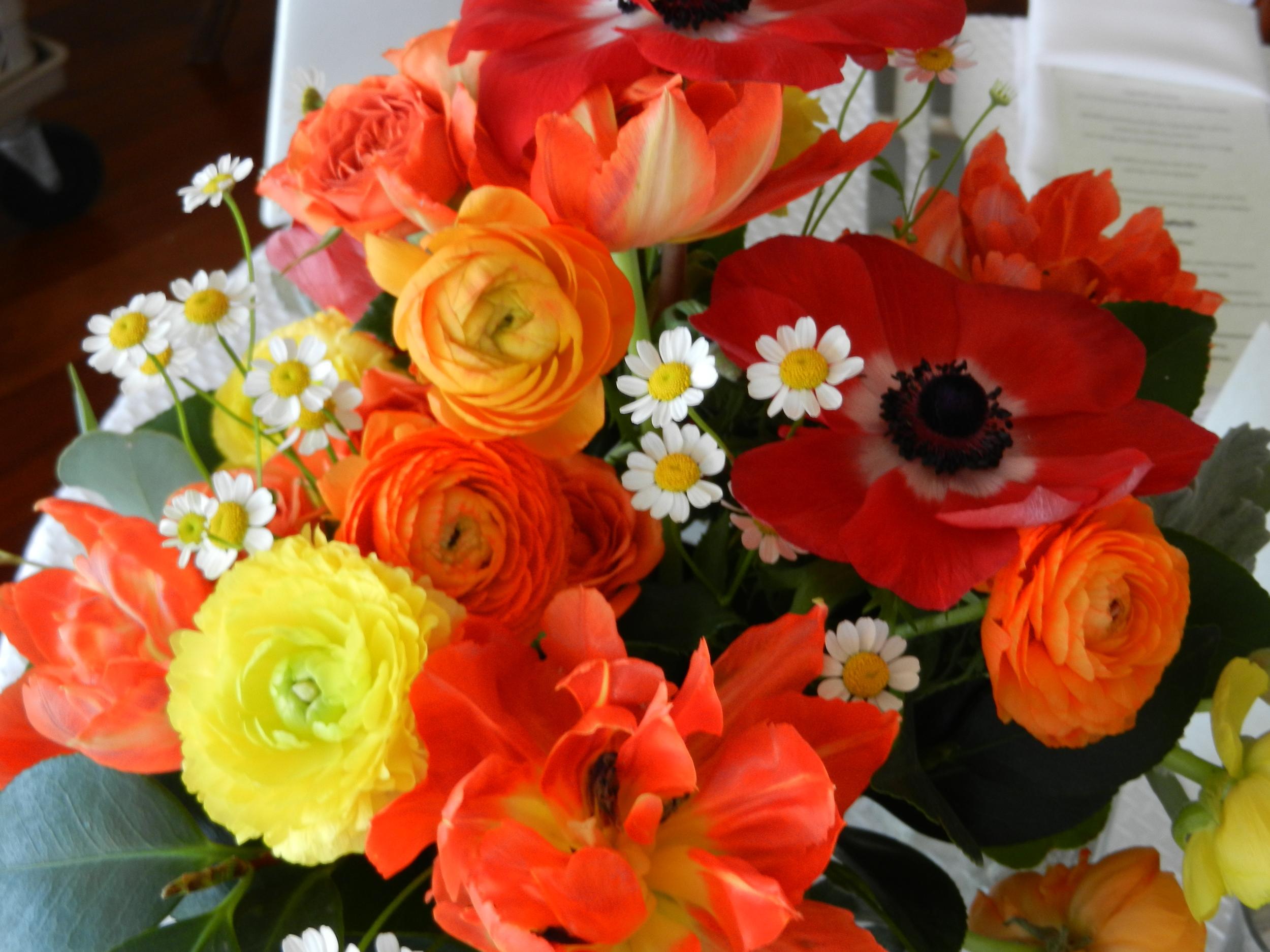 colorful_chamomile-spring.jpeg