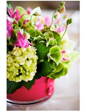 Pink_green-spring.jpg
