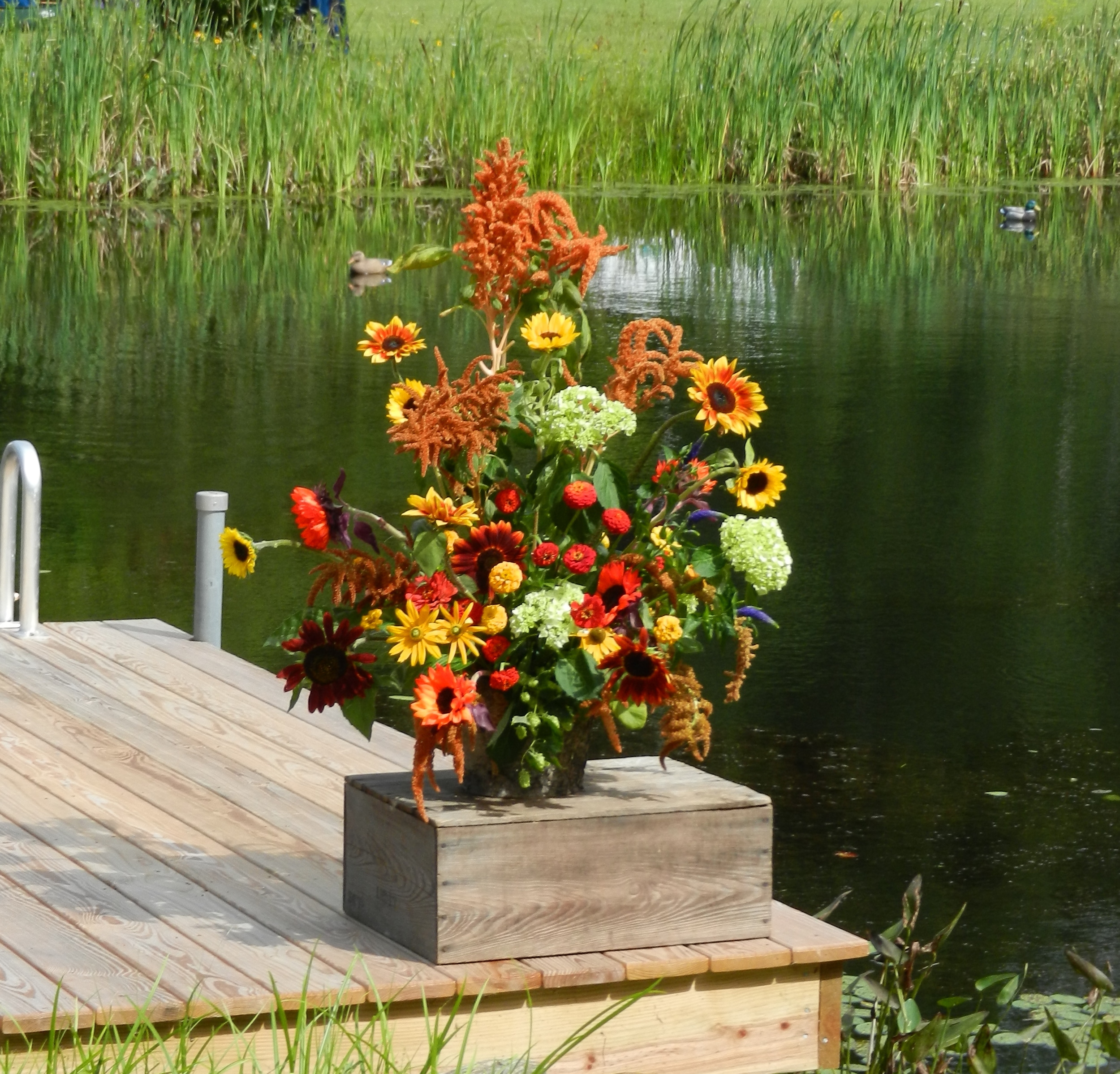 dock - pond.jpeg