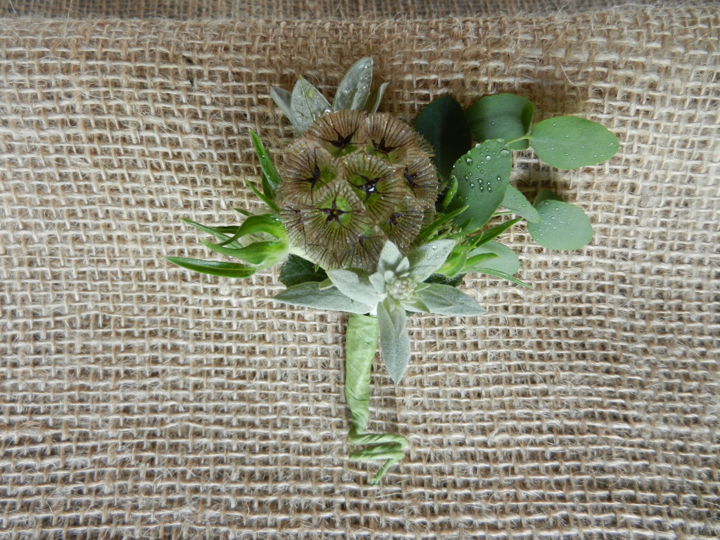 scabiosa bout-fall.jpg