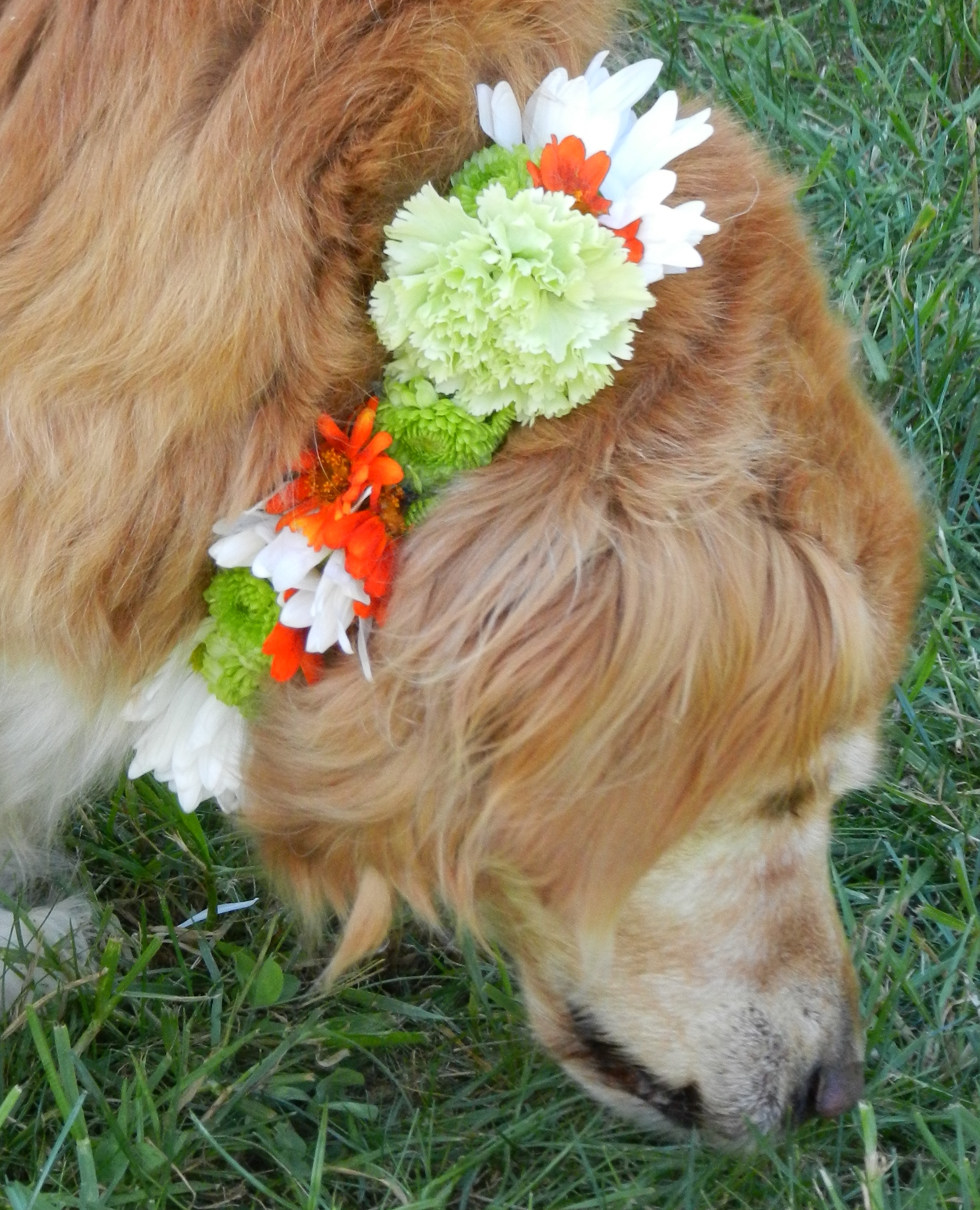 dog collar_summer-details.jpg