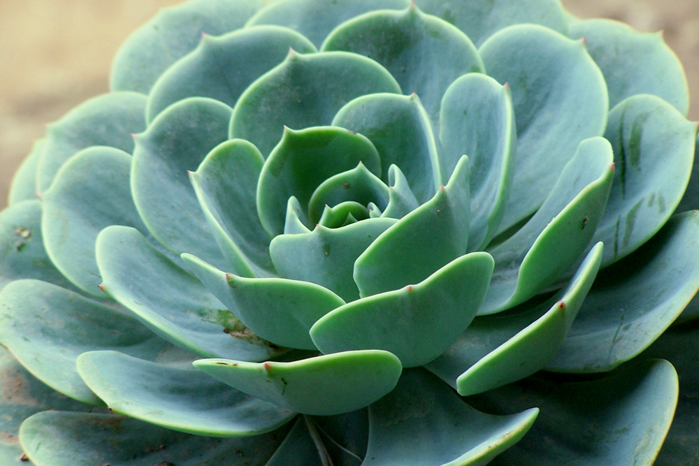 Succulant-Garden.png