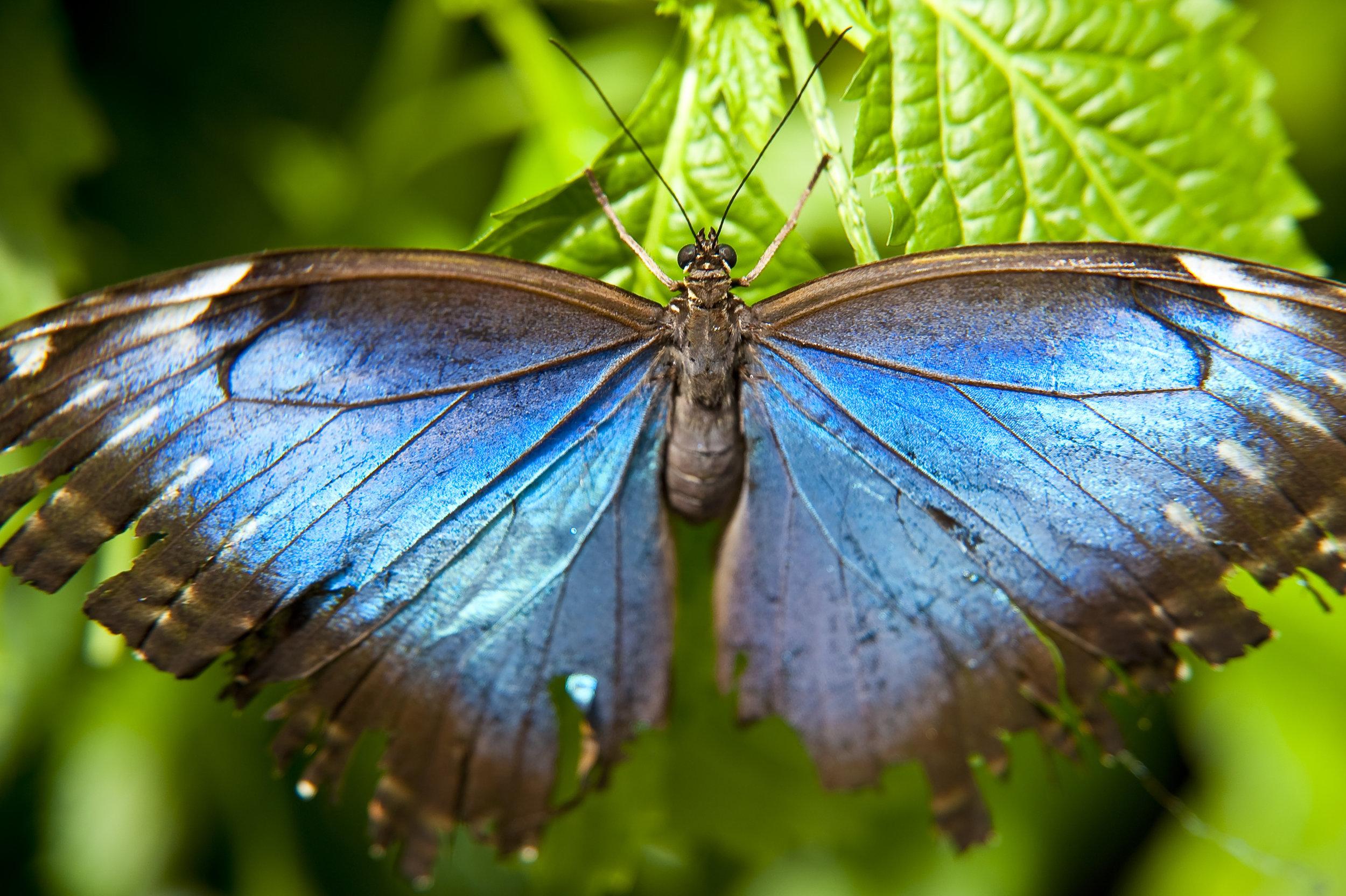 butterfly_fJOepE9d (1).jpg