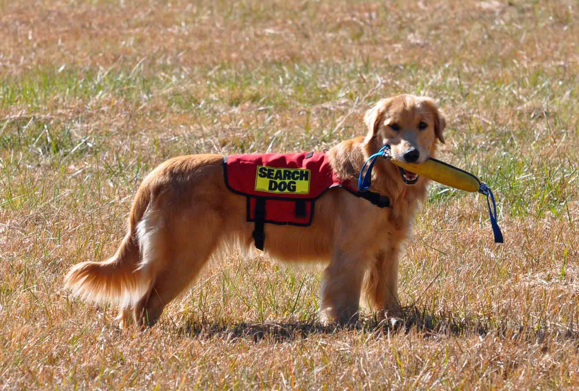 Jazz Search Dog found the mark.jpg