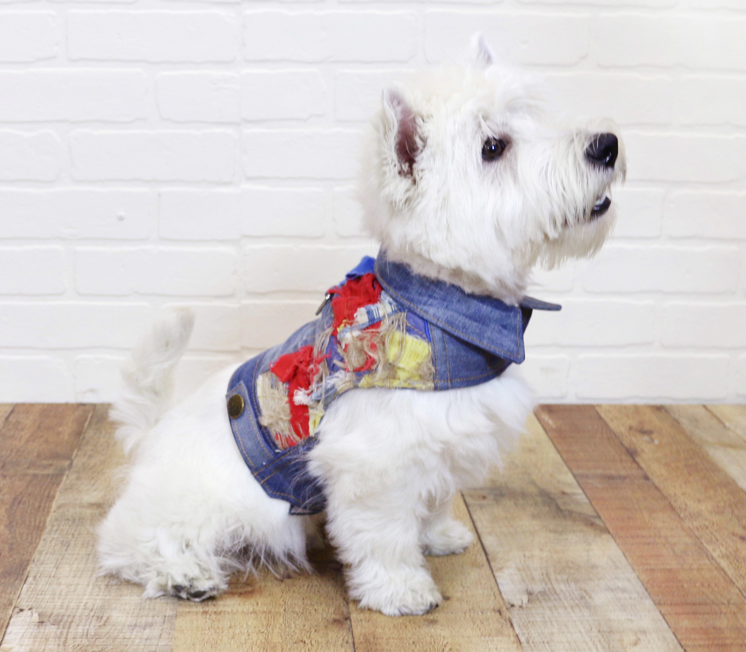 Wilbur is wearing the LOUEY style jacket with a Tattered textile application.