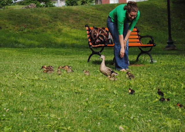 Ducklings%2B14.jpg