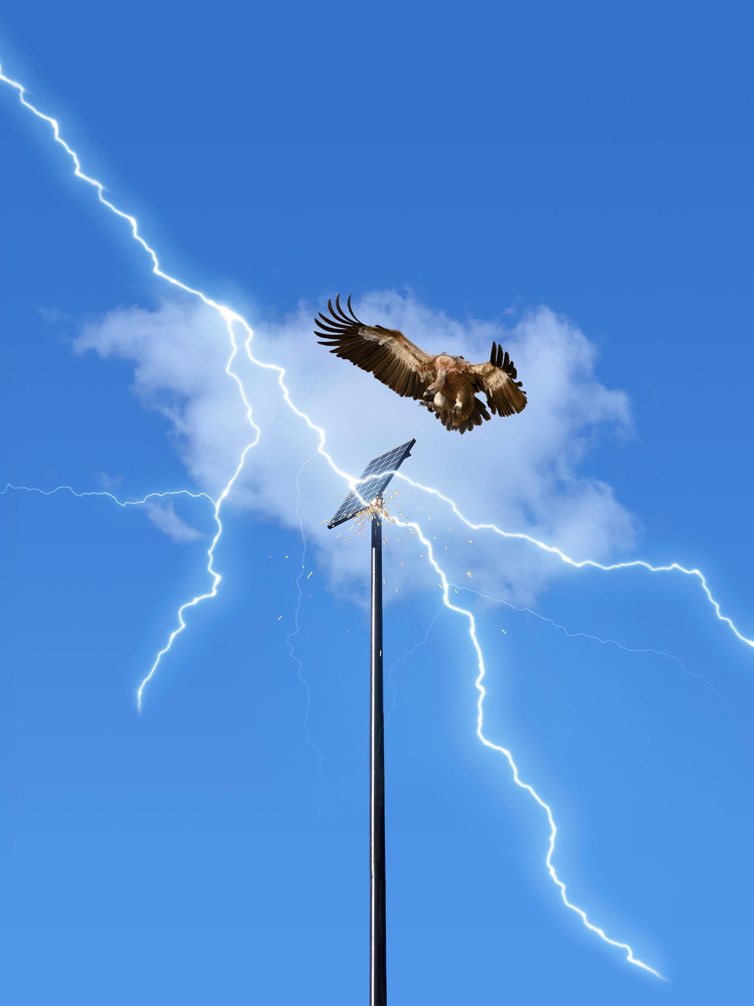 eagle_dare.jpg