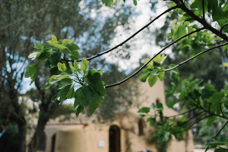 spanish-wedding-photographer-destination-wedding-photographer-from-toronto-ryanne-hollies-photography-documentary-editorial-style-toronto-wedding-photographer-portraits-details-trees-leaves-landscape.jpg